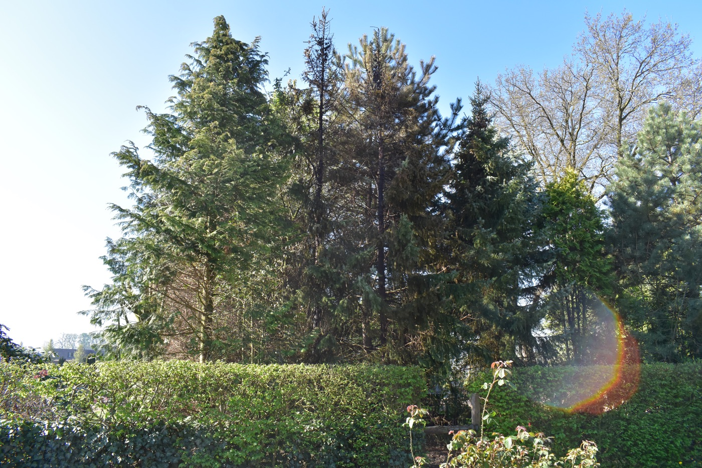 Tage später: zwei stark verkohlte Bäume