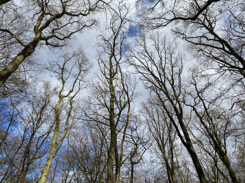 Bäume im Burgwald Dinklage · 26. Febuar 2021