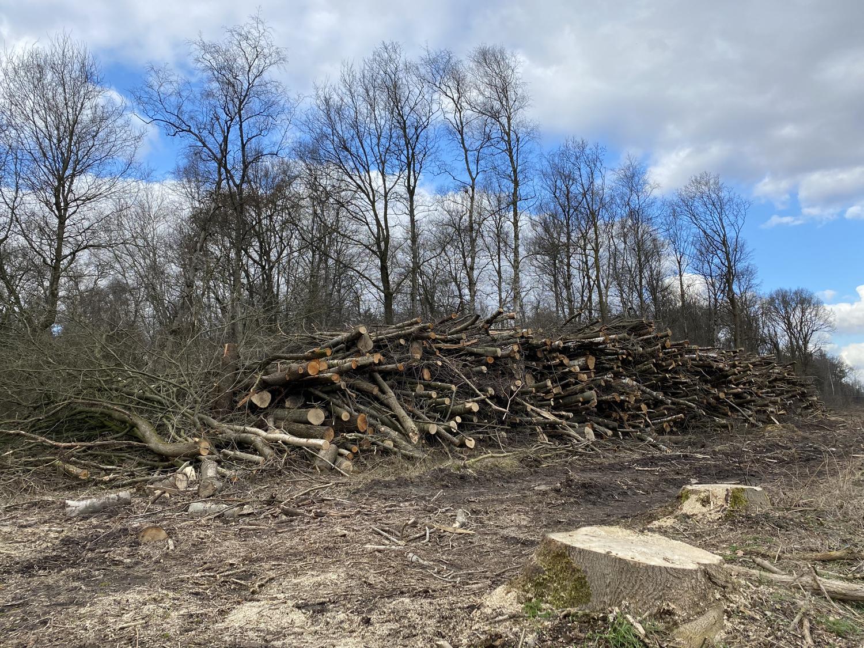 Gefällte Bäume im Burgwald Dinklage · 26. Febuar 2021