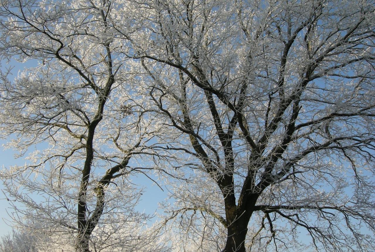 Bäume im Winter · 22. Dezember 2007