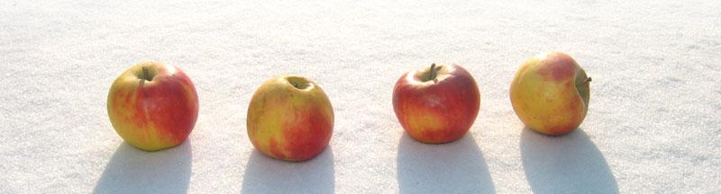 Vier Äpfel im Schnee