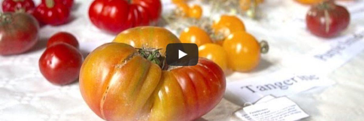 "NDR-Reportage ""Verbotenes Gemüse"""
